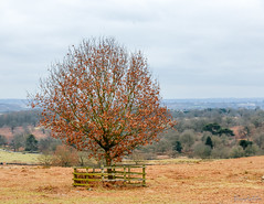 Bradgate Country Park 18th February 2018 (boddle (Steve Hart)) Tags: bradgate country park 18th february 2018 newtownlinford england unitedkingdom gb steve hart boddle steven bruce wyke road wyken coventry united kingdon great britain canon 5d mk4 6d 100400mm is usm ii 2470mm standard wild wilds wildlife life nature natural bird birds flowers flower fungii fungus insect insects spiders butterfly moth butterflies moths creepy crawley winter spring summer autumn seasons sunset weather sun sky cloud clouds panoramic landscape