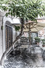 Trastevere (Pablos55) Tags: albero tree piazzetta square tavolo sedia table chair
