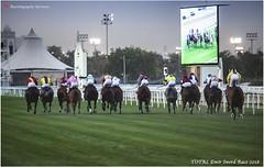 IMG_7162 copy (Services 33159455) Tags: qatar doha horse racing qrec emir horseracing raytohgraphy