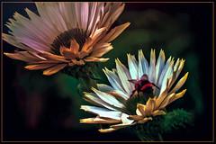 Savill Gardens (Bobinstow2010) Tags: savillgarden windsorgreatpark colour color background topaz photoshop arty