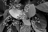 Growth & Development (Zaahir Muhammad) Tags: nature growth sprouts plants sun life greenery