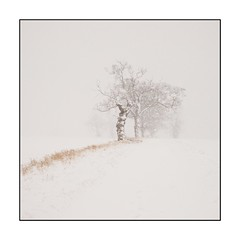 19/100x Square format (neals pics) Tags: 100xthe2018edition 100x2018 image19100 winter snow snowing tree path treeline my100x–squareformat season seasonal suffolk nowton visibility beastfromtheeast