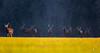A l'affut en lisère de forêt 02 (Franck Sebert) Tags: cerfs cerf elaphe red deer wild wildlife winter hiver snow 2018 février february sauvage nature daguet neige ef eos 400mm 28 ef14x canon 5d mark elaphus cervus approach approche animal mammifère arbre champ paysage forêt