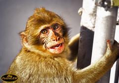Monito (PictureJem) Tags: mono monito