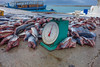 "Ready to weigh (Peter_069) Tags: malediven maldives atoll ""addu meedhoo maradhoo paradis paradise ocean sea water wasser ozean palmen"