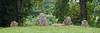 Wayland's Smithy II (meniscuslens) Tags: waylands smithy oxfordshire uffington long barrow tumulus national trust