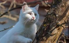 Katty (05) (Vlado Ferenčić) Tags: catsdogs vladoferencic cats katty kitty kittens animals animalplanet hrvatska hrvatskozagorje croatia nikond90 tamron9028