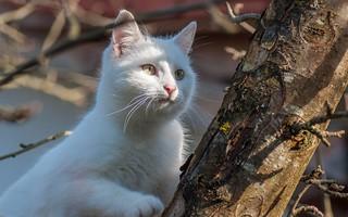Katty (05)