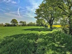 Spring green (Just landscapes) Tags: shadows shadow field crop trees rural outside scenery scenic landscape paysage iphone6s iphone england uk essex farmland farm countryside green