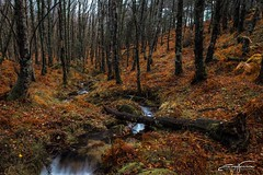 Muddy wood (jorgeverdasca) Tags: trees goth nature beautiful portugal geres gerês river forest landscape woodland wood