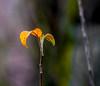 Top 2. (Omygodtom) Tags: art abstract leaves leaf dof d7100 tamron sunshine outside branch yahoo yellow orange natural nikkor nikon digital plant tree trail park nikon70300mmvrlens bright 7dwf