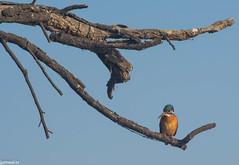 keoldeo-bharatpur-bird-sanctuary-1-3 (97) (jjamwal) Tags: birds birdwatching travel tamron nikon wildlife nature animals india