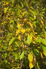 _Schwarzenbergpark_2017_10 (rhomboederrippel) Tags: rhomboederrippel fujifilm xe1 october 2017 europe austria vienna 17bezirk 17thdistrict schwarzenbergpark neuwaldegg sunny tree autumn green yellow brown park forest macro