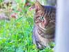 IMGP2325_R1 (TakeJet999) Tags: pentax q q7 cat borg 36ed