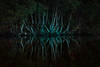 Reflections of Mystery (tonesofcolor) Tags: landscape nature outdoors outside park reflection trees wisconsin usa moody mood mystery mysterious green teal pinetrees water travel journey life emotions moonlight light country colors living lines art scenic vertical photography evening night natural earth environment inspired insprational season summer beautiful hope love joy dramatic trending popular canon rural fineart arts shadows shadow