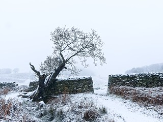 Winter at Bradgate