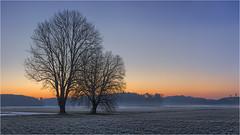 Morgenstund (Robbi Metz) Tags: deutschland germany bayern bavaria reischenau augsburgwestlichewälder landscape trees forest sunrise colors canoneos