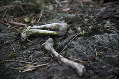 Who was me? (JuliSonne) Tags: bones forest ground old