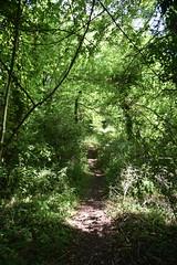 West Norfolk Junction Railway (Worthing Wanderer) Tags: norfolk summer sunny farmland coast seaside nelson holkham burnham hero august