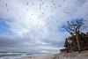 Winter auf dem Darss (Burminordlicht) Tags: darss vorpommern winter winterstimmung ostsee beach balticsea weststrand landschaft landscape landskap