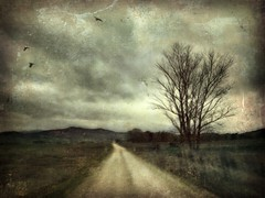 far away . . . (YvonneRaulston) Tags: vintage old sky country farm clouds morning emotive vignette creative blur surreal moments moody lane path birds tree texture art corryong vic victoria australia iphone