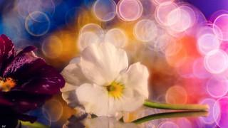 Flowers - 4457
