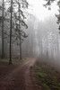 Forest Path (Nereus[GER]) Tags: forest path mist fog way dark mystery myth wood woodland tree canon eos 80d 2470mm f4 is usm lens saarland mettlach smerlot nereusger