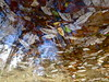Leaving the Tree (andressolo) Tags: reflection reflections reflected reflect reflejo reflejos puddle river leaf leaves water distortions distortion distorted colours color nature trees abstract