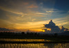 The Rice Time of the Night (Carl's Captures) Tags: sunset evening dusk skies cloudformation rice paddy field irrigated irrigation agriculture rural landscape plants production farming nature crops staple rows patterns reflections goldenhour silhouette horizon chiangmaiprovince northernthailand thai siam asian southeastasia radiating radiance rays trees nikond5100 tamron18270 photoshopbyfehlfarben thanksbinexo