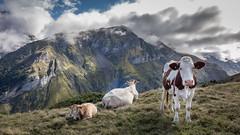 Vallée d'Estaubé, Pyrénées, France (Aurélie_D) Tags: pyrénées france montagne paysage ciel nuage