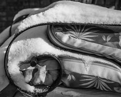 Lemonade (agianelo) Tags: snow covered arm chair metal canvas outdoor monochrome bw blackandwhite