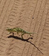 hotfooting it in Kruger Nat Park