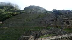 Cloudy Mystic Scene of  Machu Picchu, Peru - P3024980 (Toby Garden) Tags: machu picchu llama wild chinchilla
