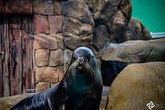 Aquário de São Paulo (OtCirc Fotografia) Tags: nikon nikond90 d90 brasil saopaulo animais aquario aquariodesaopaulo aquariosp zoologico animals zoo aquarium spaquarium brazil