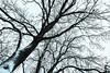 branches (++sepp++) Tags: landscape landschaft landschaftsfotografie schnee winter snow bäume trees äste graben bayern deutschland de branches germany bavaria januar january bw blackwhite monochrom einfarbig sw schwarzweis