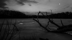 Black Sunset (Faron Dillon) Tags: dark black white blackandwhite blackwhite lake ice winter ontario richmondhill moon fallen sticks canon 24105is 5ds nature night late trees branches snow canada bond sky clouds