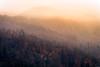 Golden fog (Rico the noob) Tags: 2018 d850 landscape nature switzerland 70200mmf28 trees zurich tree schweiz forest golden 70200mm fog sunrise dof published outdoor