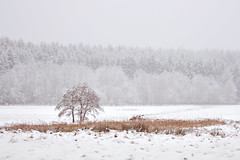 time stands still (☾allisto) Tags: winter chill cold tree forest clearing meadow odenwald morning serene calm silent landscape snow foggy misty nature