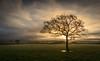 Contre jour (Matt Bigwood) Tags: tree backlt kingswood gloucestershire nikond800 2485 landscape cotswold