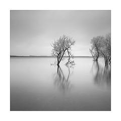 Watching the detectorist (Nick green2012) Tags: lake longexposure blackandwhite square minimal silence trees