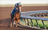Los Alamitos Race Track 9.10.16 18 (Marcie Gonzalez) Tags: california chrome racehorse racehorses race horse horses track racing racer ride rider sport event fast run running round southern calif ca usa us north america sports practice training los alamitos