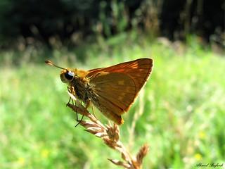 Butterfly 1575