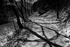 Shadows on my path (Turin) (LussuF) Tags: nature blackandwhite bw turin path river trees wood italy forest