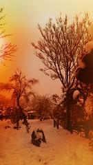 20180131_012153 (afs.harp) Tags: tree snow color winter tehran park beautiful