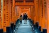 Fushimi Inari Shrine / Kyoto (thedailyjaw) Tags: kyoto fushimiinarishrine fushimi inari 1000gates gates vermillion orange japanese kanji lettering frame gated walk stroll shrine donations donors funding temple prayer pray religious spiritual touristattraction