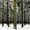 Winter Trees - High Fens (L I C H T B I L D E R) Tags: winter tree trees stamm trunk belgien baraquemichel hohesvenn highfens eupen malmedy hautesfagnes wood forest snow belgium huawei handy mobil