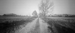 Winter path (Rosenthal Photography) Tags: 6x12 ff120 landschaft lochkamera bnw schwarzweiss anderlingen natur asa100 pinhole mittelformat dezember winter städte analog bw rodinal15021°c9min 20180106 fomapan100 zeroimage612b dörfer siedlungen landscape nature path road track trail way pathway mood blackandwhite zero image 612b 40mm f158 fomapan rodinal 150 epson v800