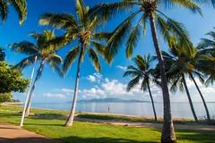 The Strand - Australia-3331 (islandfella) Tags: strand australia townsville queensland beach beachscape seascape coconuts palm morning serene magnetic island blue sky