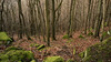 004/2018 Mystical Forest (doxpix73) Tags: wald moos baum
