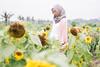Dead flowers. (Januarain Photography) Tags: januarain photo photography hijab girl muslim muslimgirl canon flickr female sunflower field nature flower yongnuo 35mm